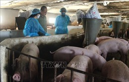 Kêu gọi doanh nghiệp chăn nuôi chung tay bình ổn giá thịt lợn