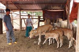 Nỗ lực giảm nghèo nơi vùng biên giới Đức Cơ, Gia Lai