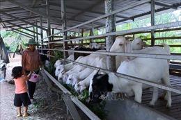Những điểm sáng trong phong trào phụ nữ dân tộc phát triển kinh tế ở Đồng Nai