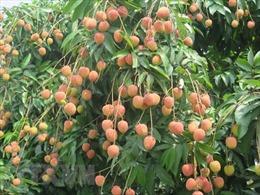 Tuyến vận tải biển mới với Trung Quốc sẽ thúc đẩy xuất khẩu trái cây của Việt Nam