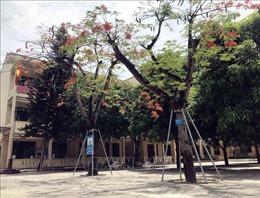 Cần khảo sát, đánh giá chất lượng cây xanh trong trường học trước khi chặt hạ