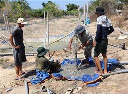 Làng nho Thái An chống chọi với khô hạn nghiêm trọng