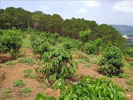 Lâm Đồng kiên quyết xử lý tình trạng xâm lấn đất rừng