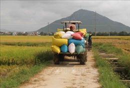 Nhiều loại nông sản tiếp đà giảm giá