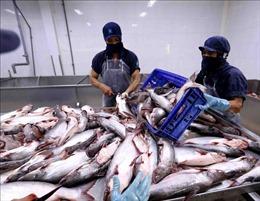 Đề xuất xử lý vướng mắc về thuế với sản phẩm thủy sản chế biến và sơ chế