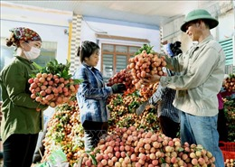 Kết nối sản phẩm tiêu dùng của Việt Nam sang thị trường Trung Quốc