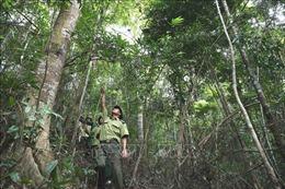 Tiêu chí chuyển mục đích sử dụng rừng tự nhiên sang mục đích khác