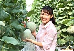 Tuổi trẻ Vĩnh Long sáng tạo, khởi nghiệp - Bài 2: Bén duyên cùng nông nghiệp công nghệ cao