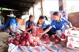 Doanh nghiệp nông sản tiếp cận Hiệp định EVFTA