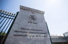 WTO kêu gọi tăng cường tài trợ thương mại cho các nước đang phát triển
