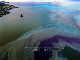 Người dân Mauritius chung tay khắc phục sự cố tràn dầu