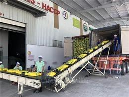 Cần Thơ đóng lô gạo đầu tiên xuất khẩu vào EU với thuế suất 0%