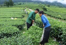 Động lực thoát nghèo của người dân miền núi Tân Uyên