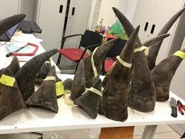 Tăng hình phạt với trùm buôn lậu sừng tê giác quốc gia