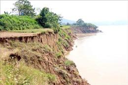 Tuyến đê sông Lô qua tỉnh Tuyên Quang có nhiều điểm sạt lở nghiêm trọng