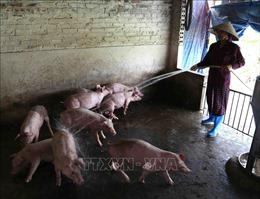 Khuyến cáo người chăn nuôi không mua con giống trôi nổi, không rõ nguồn gốc