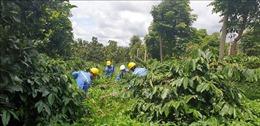 Tăng chất lượng nông sản, đáp ứng yêu cầu xuất khẩu vào thị trường EU
