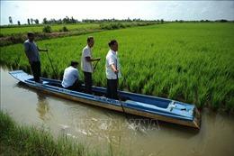 Phát triển bền vững mô hình tôm – lúa ở Đồng bằng sông Cửu Long