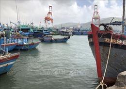 Ứng phó với bão số 9: Bình Định cấm biển, đưa tàu vận tải đến các vùng biển an toàn
