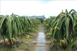 Thúc đẩy liên kết trong sản xuất nông nghiệp, hướng tới phát triển bền vững