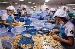 Việt Nam giữ vững ngôi đầu thế giới về chế biến và xuất khẩu điều