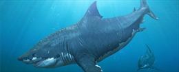 Phát hiện mới về tập tính nuôi con của cá mập lớn nhất thời tiền sử