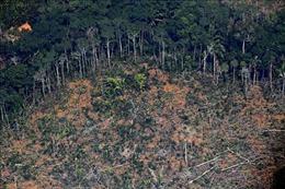 EU yêu cầu Brazil cam kết chống nạn phá rừng Amazona để cứu vãn thỏa thuận thương mại