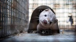 Mỹ xác nhận trường hợp động vật hoang dã đầu tiên nhiễm virus SARS-CoV-2