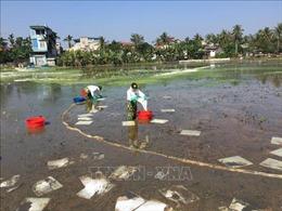 7 chất phân tán được phép sử dụng ứng phó sự cố tràn dầu trên biển