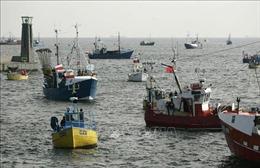 EU duy trì hạn ngạch đánh bắt cá thêm 3 tháng