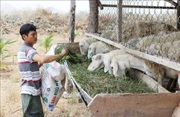 Ninh Thuận: Thực hiện đồng bộ các giải pháp giảm nghèo nhanh, bền vững