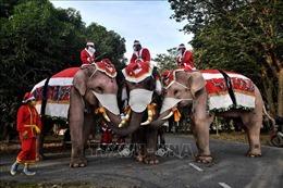 Ông già Noel cưỡi voi phát khẩu trang để nâng cao ý thức phòng dịch COVID-19