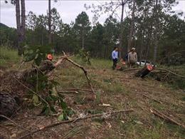 Lâm Đồng chỉ đạo điều tra, xử lý vụ phá rừng theo kiểu 'công nghệ' mới