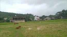 Sân vận động trở thành bãi thả bò vì dự án quy hoạch 'treo'