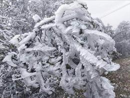 Đỉnh đèo Khau Phạ xuất hiện băng giá