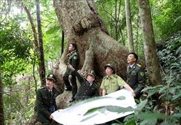 Tăng cường bảo vệ rừng dịp Tết Nguyên đán