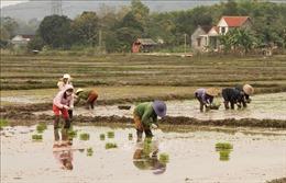 8,5% diện tích gieo cấy đã lấy nước trong ngày đầu đợt 1 vụ Đông Xuân