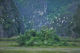 Nhiều hoạt động về bảo tồn và sử dụng bền vững các vùng đất ngập nước