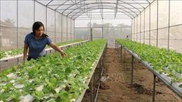 Đổi mới mô hình nông nghiệp theo hướng sản xuất hàng hóa quy mô lớn