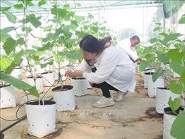 Thành lập Khu nông nghiệp ứng dụng công nghệ cao Thái Nguyên