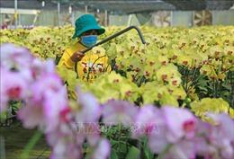 Thủ phủ hoa Lâm Đồng chuẩn bị cho đợt cao điểm vụ Tết