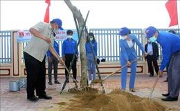 Bình Định phát động Tết trồng cây 'Đời đời nhớ ơn Bác Hồ'