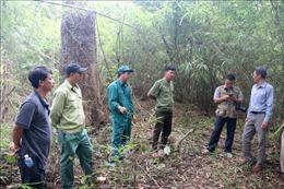 Bình Thuận: Sẽ xử lý nghiêm các đối tượng cố ý gây cháy rừng