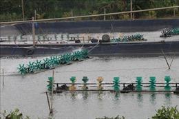 Xây dựng vùng nuôi thủy sản xuất khẩu ở hạ lưu sông Tiền