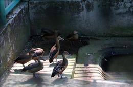 Ngôi nhà thứ hai của động vật hoang dã ở Vườn Quốc gia U Minh Thượng