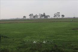 Vĩnh Phúc: Nhiều bất cập trong dồn điền đổi thửa ở xã Phú Xuân