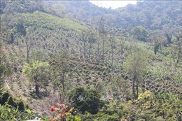 Nhiều diện tích rừng tự nhiên tại xã Suối Tân bị xâm lấn, đốn hạ
