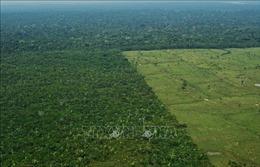 Rừng nguyên sinh bị chặt phá trong năm 2020 tương đương diện tích Hà Lan