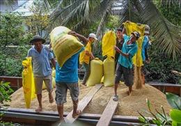 Lúa được giá, nông dân có lãi từ 40 - 50 triệu đồng/ha