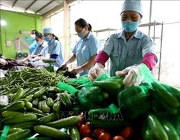 Khó đưa nông sản sạch vào kênh tiêu thụ hiện đại